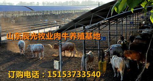临安科学化标准化养牛场、临安辰光牧业专业生