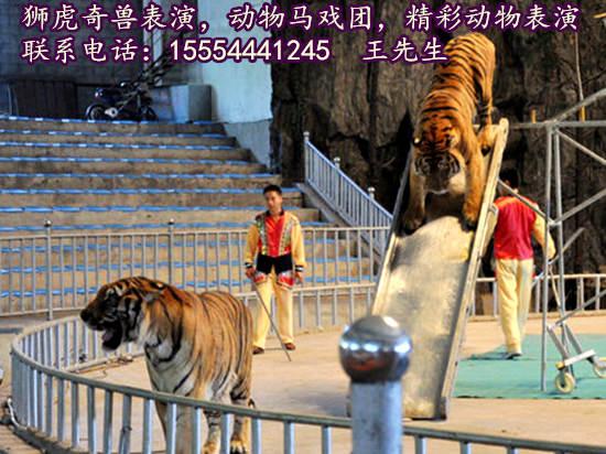 舟山市海洋动物表演