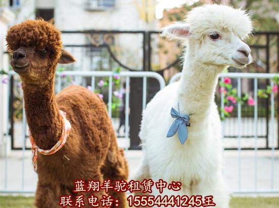 天津市马戏团动物表演