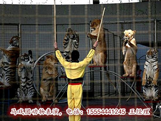 海狮表演,    马戏团动物表演,    活体企鹅展览,    杂技表演
