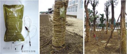 恢复树势、促成活-大树施它活