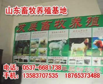 大连养羊-大理养羊场-大理养羊基地