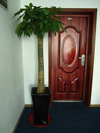 提供大连和沈阳地区绿植租摆、花卉租赁、盆栽出租养护服务
