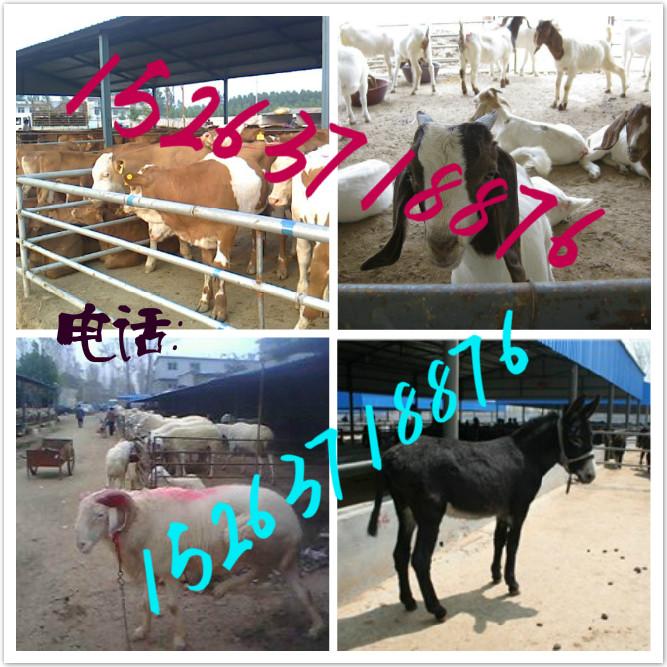 黄牛各部位名称图解