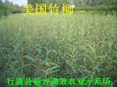 行唐县杨台高效农业示范场
