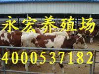 ���|肉狗肉牛�偃文��x