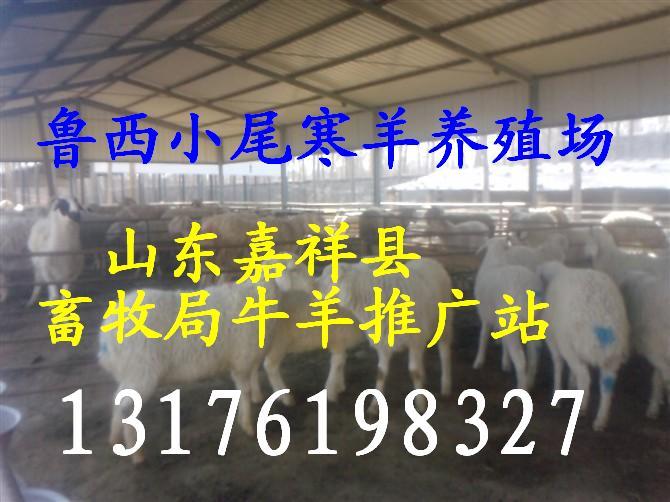 ���|肉狗13515472728牛�偃文��x