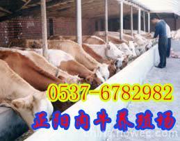 遵义哪里有卖牛的肉牛犊多少钱一头18766832444