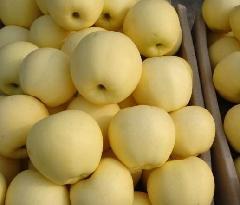 大量供应黄元帅苹果、金帅苹果13954533158