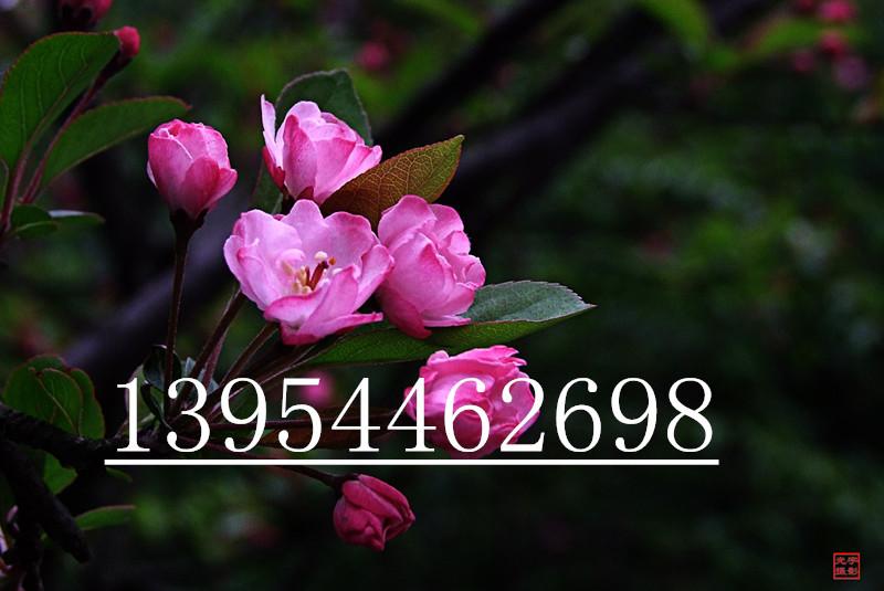 开心果粘贴画图片大全花朵步骤