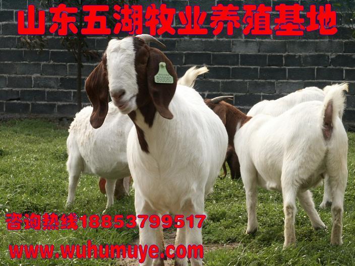 动物 羚羊 704_528