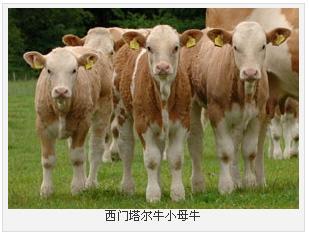 东山区哪里有卖羊羔的