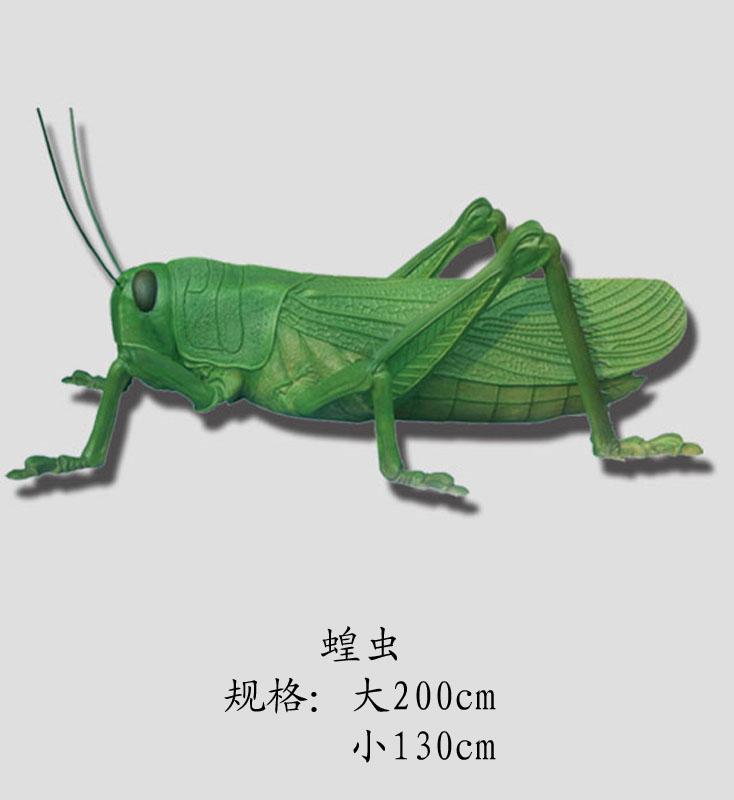 节肢动物蝗虫_教学模型