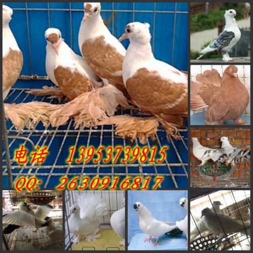 山东嘉硕珍禽养殖基地