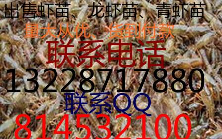 2015年的淡水虾苗现在价钱是多少钱一斤、仙桃当地龙虾苗价钱