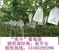 葡萄套袋、梨套袋、苹果套袋山东省莱阳银通纸业生产