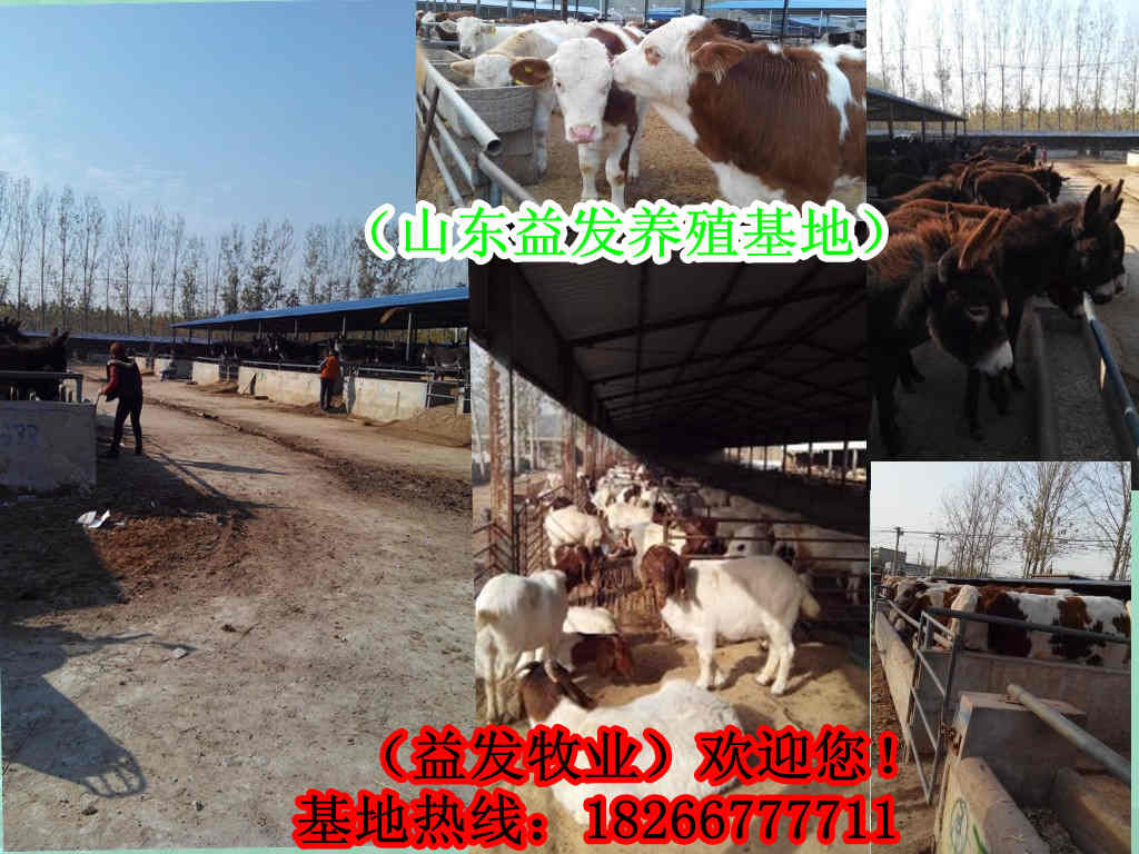 驴皮的价格屠宰牛