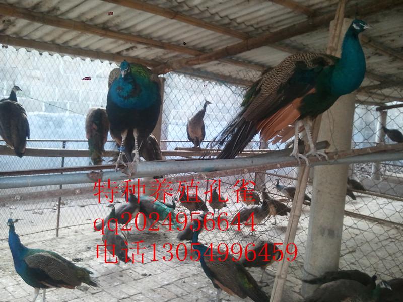 山东农村特种养殖生产合作社