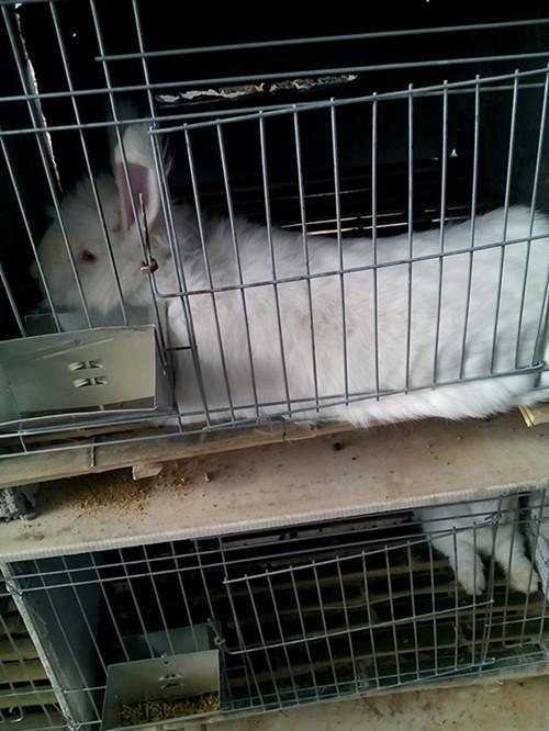 �R��L毛兔�B殖示范基地