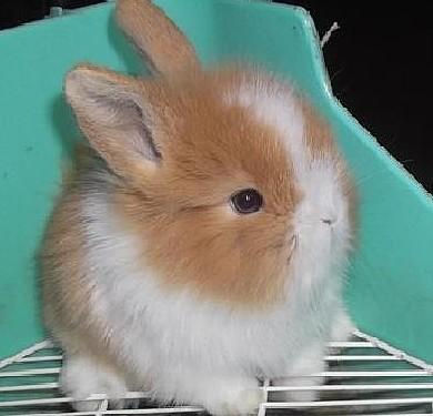 河南省洛阳市哪里有卖产毛高的长毛兔