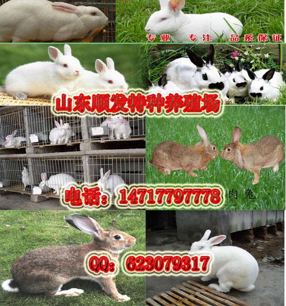 北京乳元寶鴿養殖