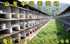 桂平大的长毛兔养殖场桂平适合长毛兔繁殖的季节