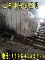 河北省石家庄地区有卖长毛兔的吗河北省石家庄养殖长毛兔加盟