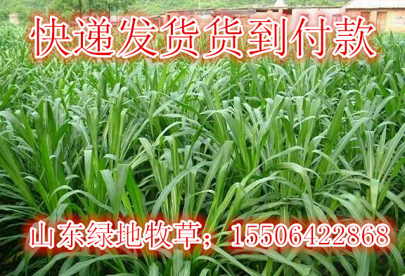 唐山鸦鸿桥县到东莞物流公司13241120099