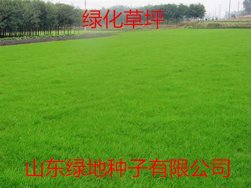 珠龙草坪网