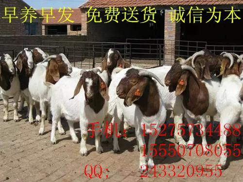 大量出售个体养殖驴货源充足漯河