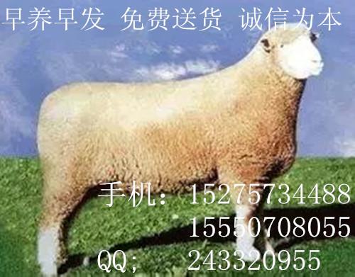 大量出售个体养殖驴批量销售平顶山