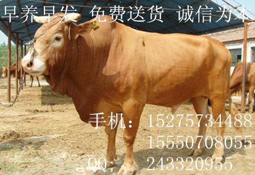 大量出售个体养殖驴manbetx登陆直销新乡