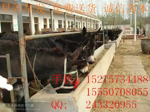 大量出售个体养殖驴货源充足鹤壁