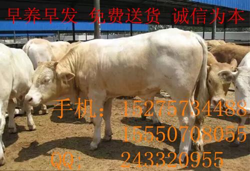 大量出售个体养殖驴货源充足开封