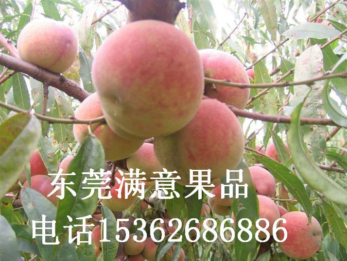 各种水果代购代销