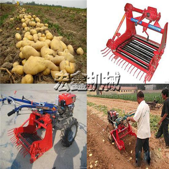 土豆收割机克拉玛依丹参西洋参收获机