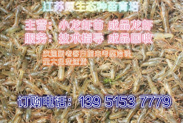 大龙虾多少钱一斤张家界龙虾报价