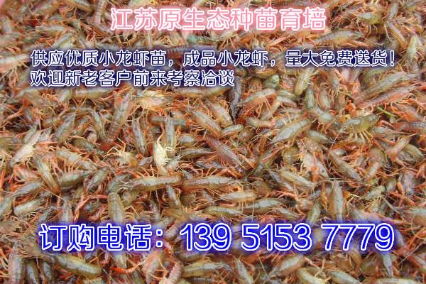大龙虾多少钱一斤慈利龙虾报价