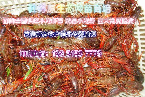 大龙虾多少钱一斤桑植龙虾报价