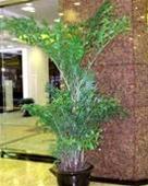 武汉绿值租赁绿值出租绿值租摆绿值租售
