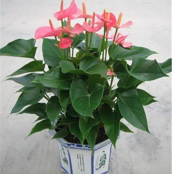 武汉花卉租赁花卉出租花卉租摆花卉租售