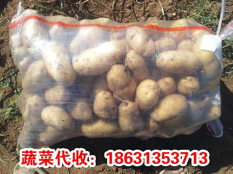 河北土豆批发 错季蔬菜供应 河北蔬菜基地