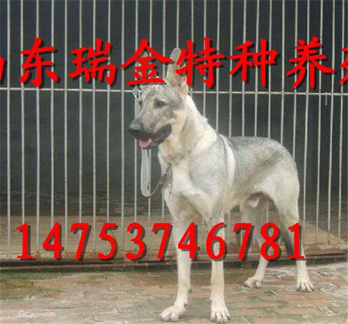 山东瑞金名犬珍禽特种养殖场
