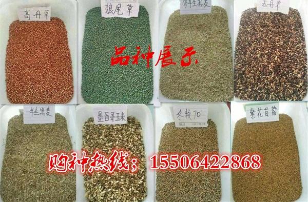 吉林延吉哪里有卖牧草种子的厂家