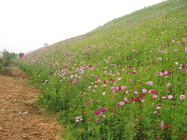 巴音郭楞山区养牛适合种植什么牧草