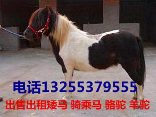 陕西省商洛市有骑乘骆驼交易市场吗