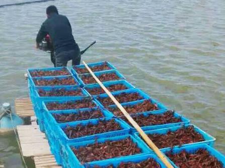 四川龙虾养殖基地养虾技术现在养殖什么好