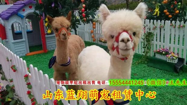 暖场狗熊表演活动^台州市