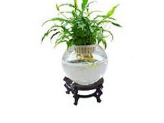 可靠的水培花卉技术上哪找:济南水培花卉技术