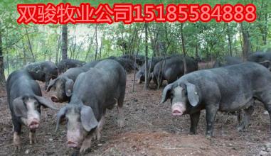 沂水县秀唐香猪单价